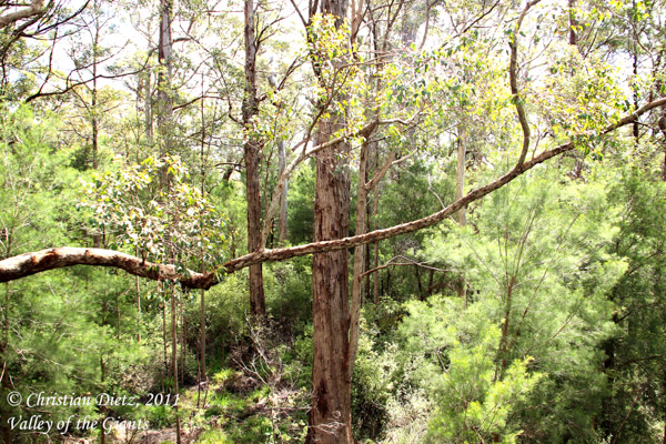 Valley of the Giants - Western Australia - 2011